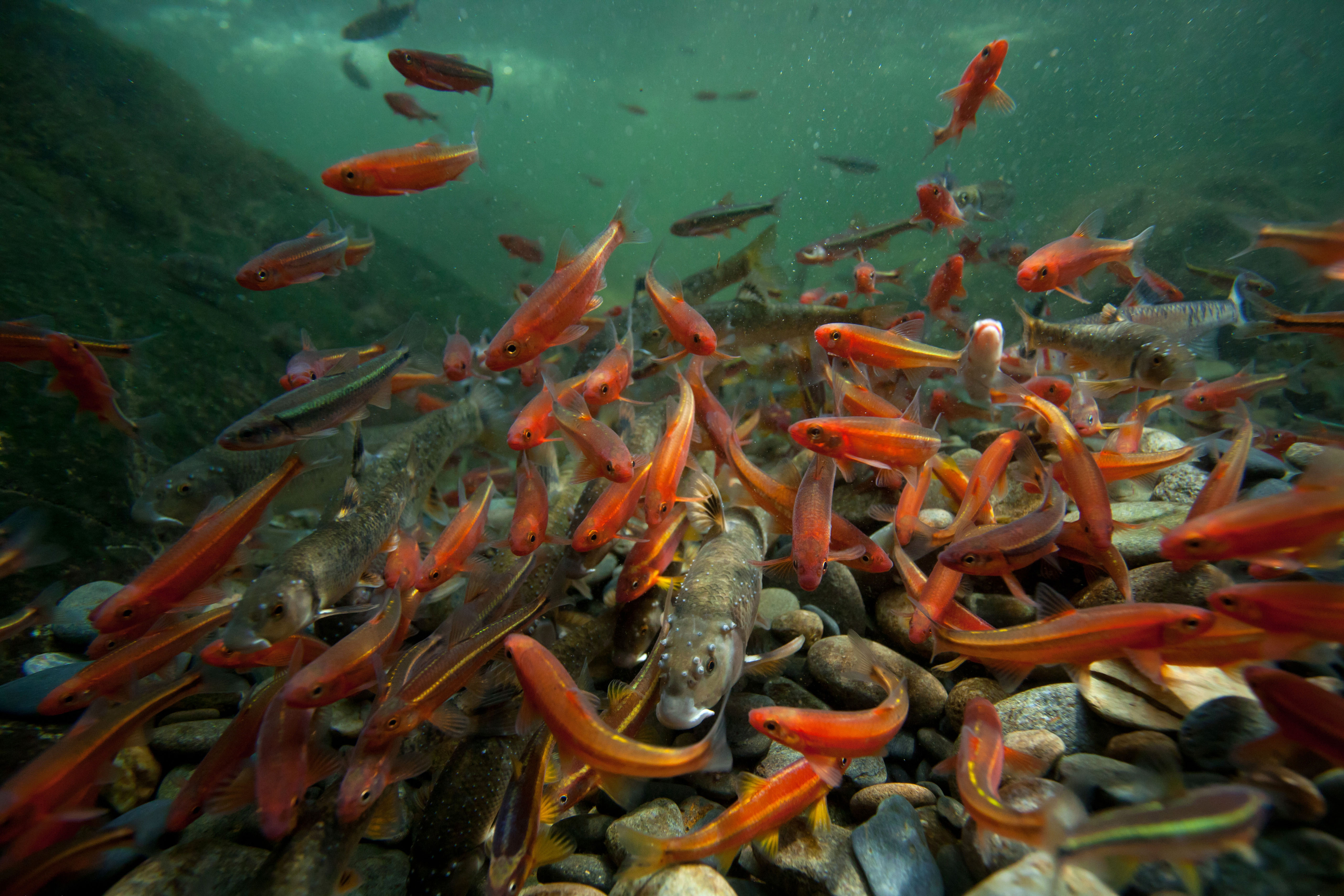 Hidden Rivers Fish