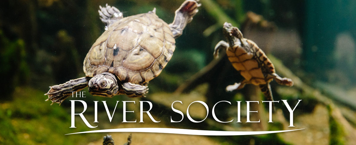 River Society Turtle Header