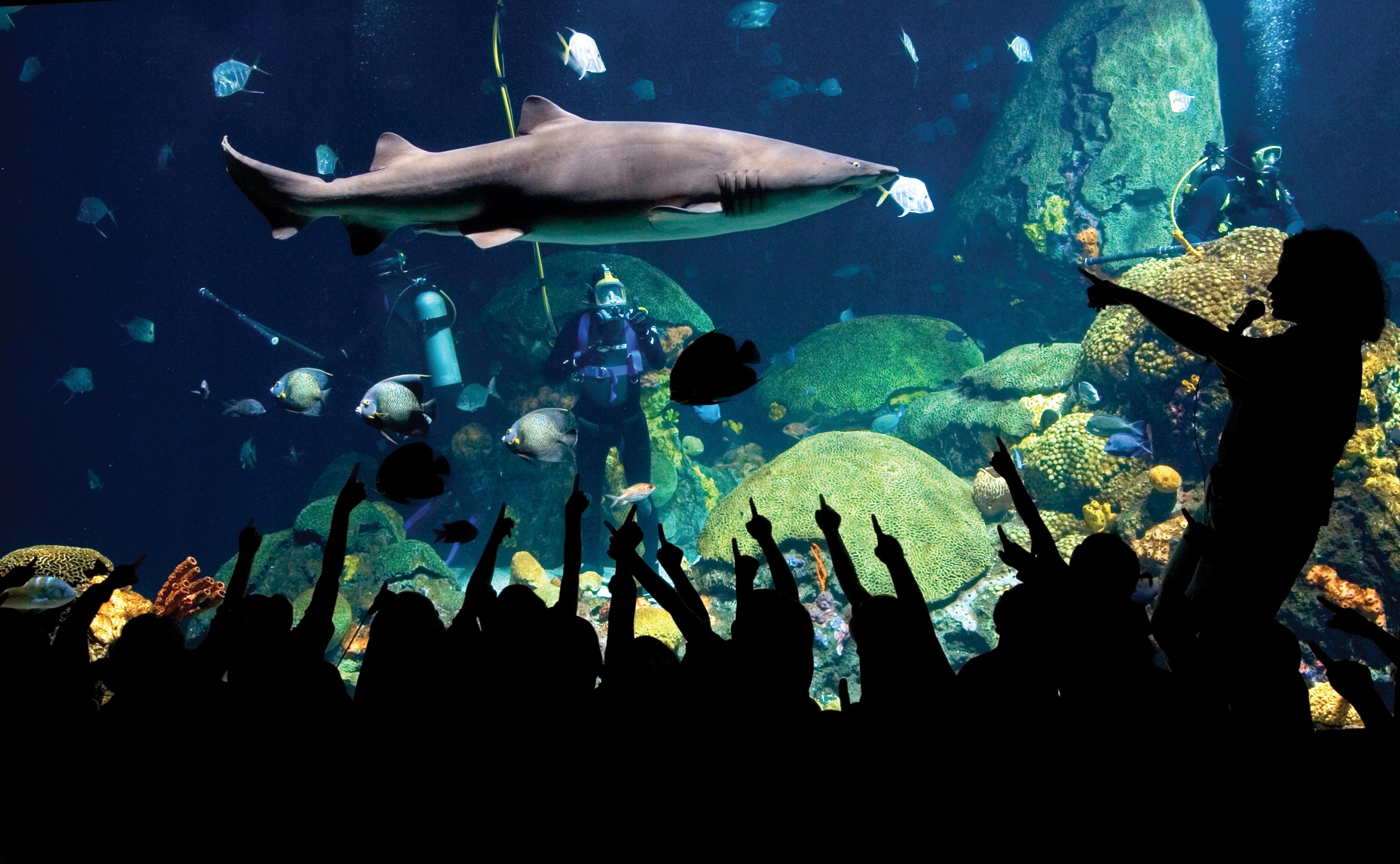 aa Sharks