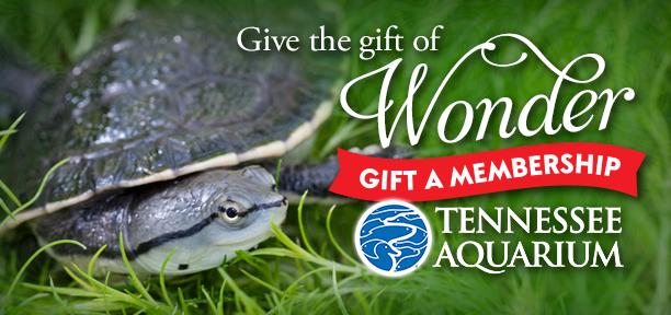 gift membership 2017