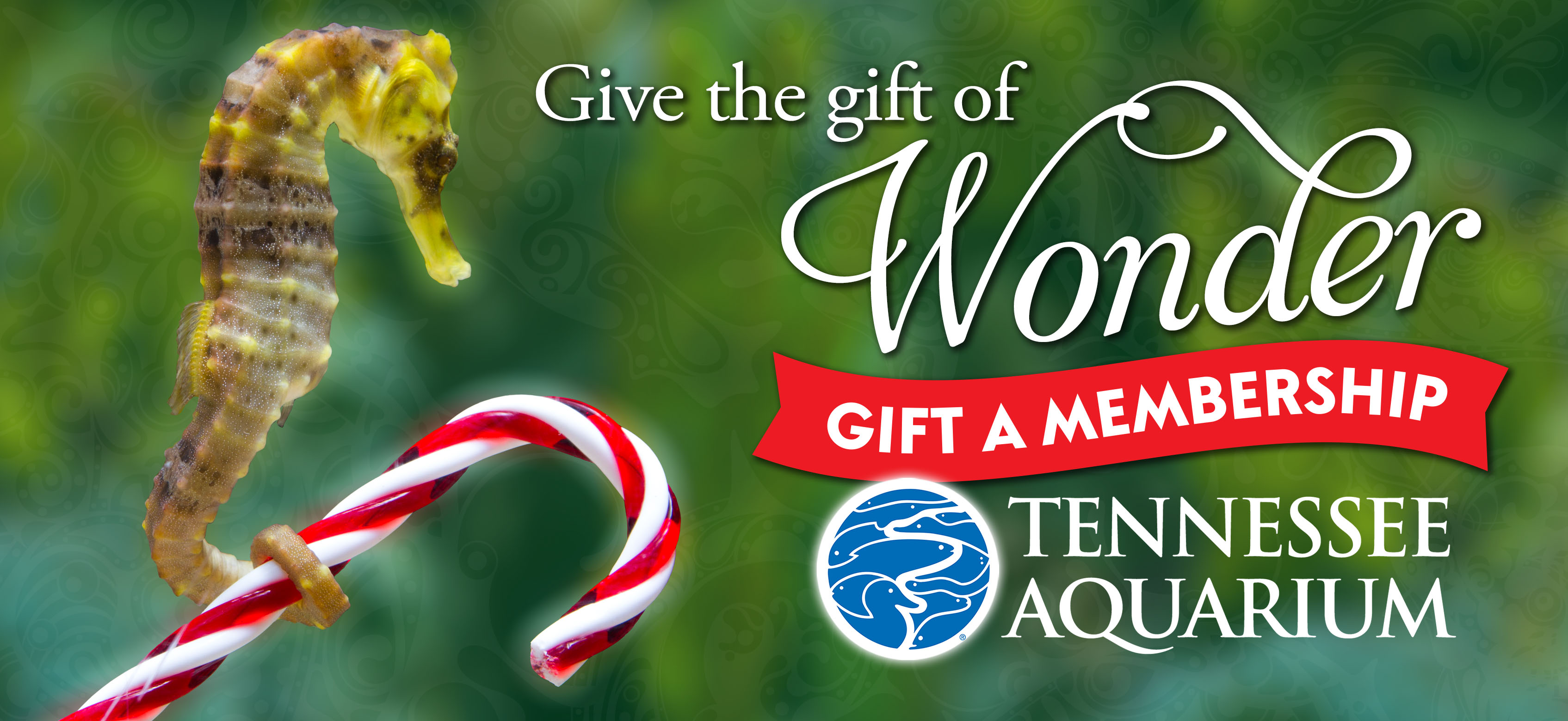 Tennessee Aquarium Membership